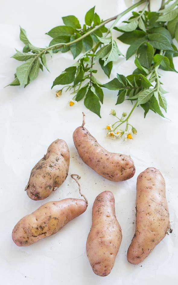 Potato Salad with Smoked Salmon and Eggs