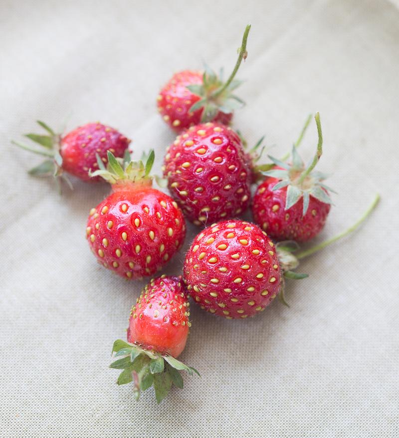 Stawberrymuffins-7